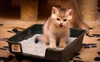 Как отучить кота гадить где попало — по углам, на диване, в цветы и т.д., чем обработать место