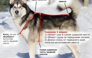 Как выбрать шлейку правильного размера для собаки крупной крупной, мелкой или средней породы