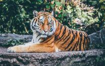 Самые большие хищные дикие кошки мира