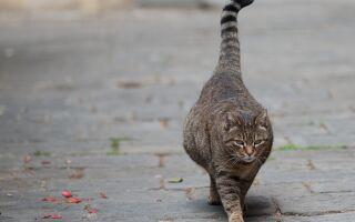 Как ведет себя кошка перед родами: первые признаки и симптомы