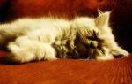 Почему кошка часто ходит в туалет по маленькому, сколько раз в день писает котенок или взрослый кот