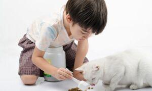 Сколько раз в день нужно кормить кошку: нормы кормления, правильный рацион питания, таблица