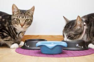 Кошка загребает возле миски