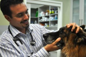 Операция при катаракте у собак.