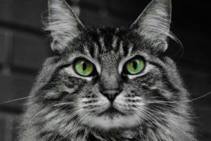Смотреть кошке в глаза