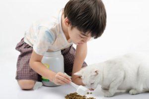 Какую еду можно котенку в 3 месяца