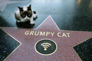 Grumpy cat по кличке Тард - самый печальный и сердитый кот в мире.