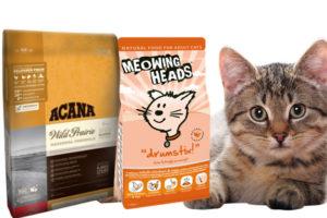Холистик лучший корм для кошек