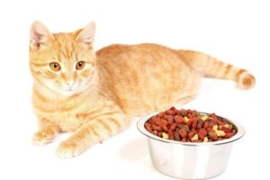 Корм для кошек Холистик - рейтинг