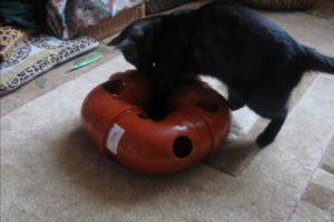 Делаем игрушки для кошек своими руками: из бумаги, коробок, носков, труб и других материалов