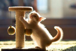 Кошачья когтеточка