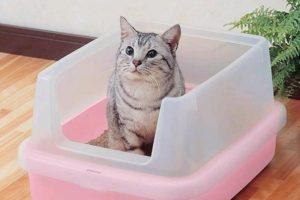 Большой лоток для кошки.
