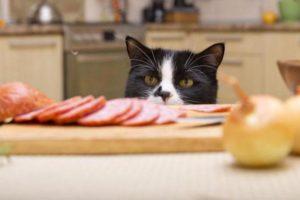 Кошачий корм натуральный