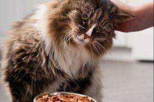 Нормы кормления влажным кормом кошек
