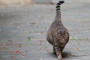 Признаки приближающихся родов у кошки.