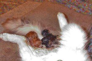 Процесс кошачьих родов