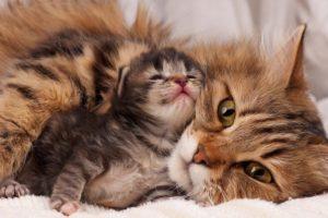 Роды у кошки.