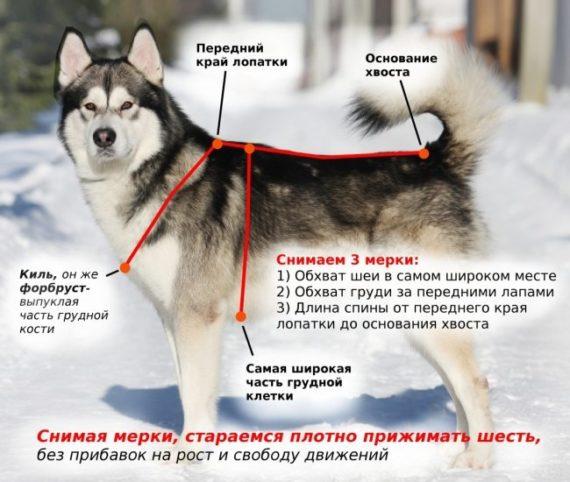 Размеры собачьих шлеек