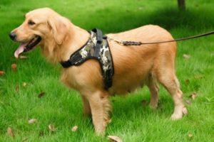 Собачья шлейка-жилетка